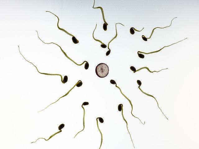 sperm-956480_640-1